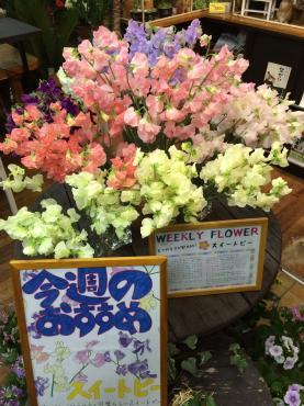 今週のおすすめです… 「ムスメヤ花店」 (山形県長井市の花屋)のブログ